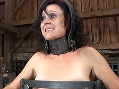 Gagged gal with clamped nipples receives wild joy